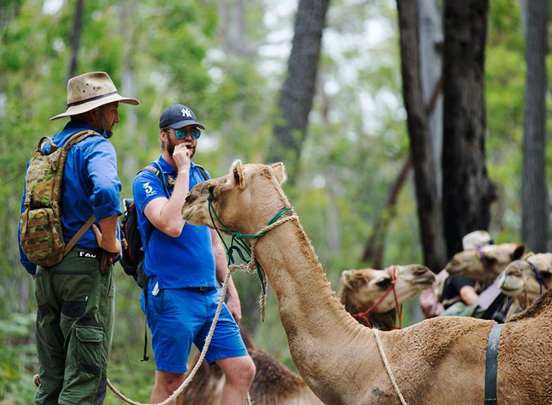 How training camels
