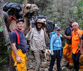 Volunteers to the rescue as camels become stuck in Tasmanian wilderness