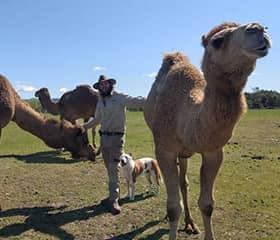 Solo camel adventurer resumes trek after leaving quarantine in Tasmania